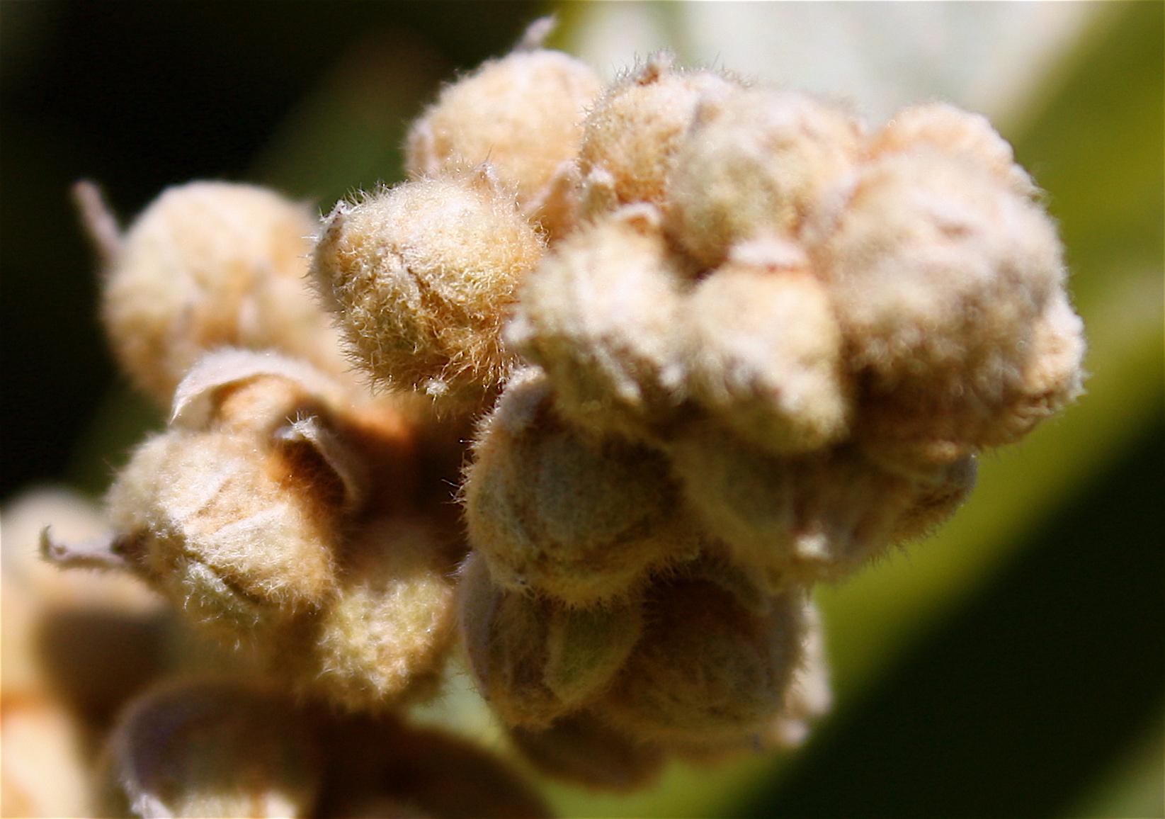 Piedmont Georgia Flowers