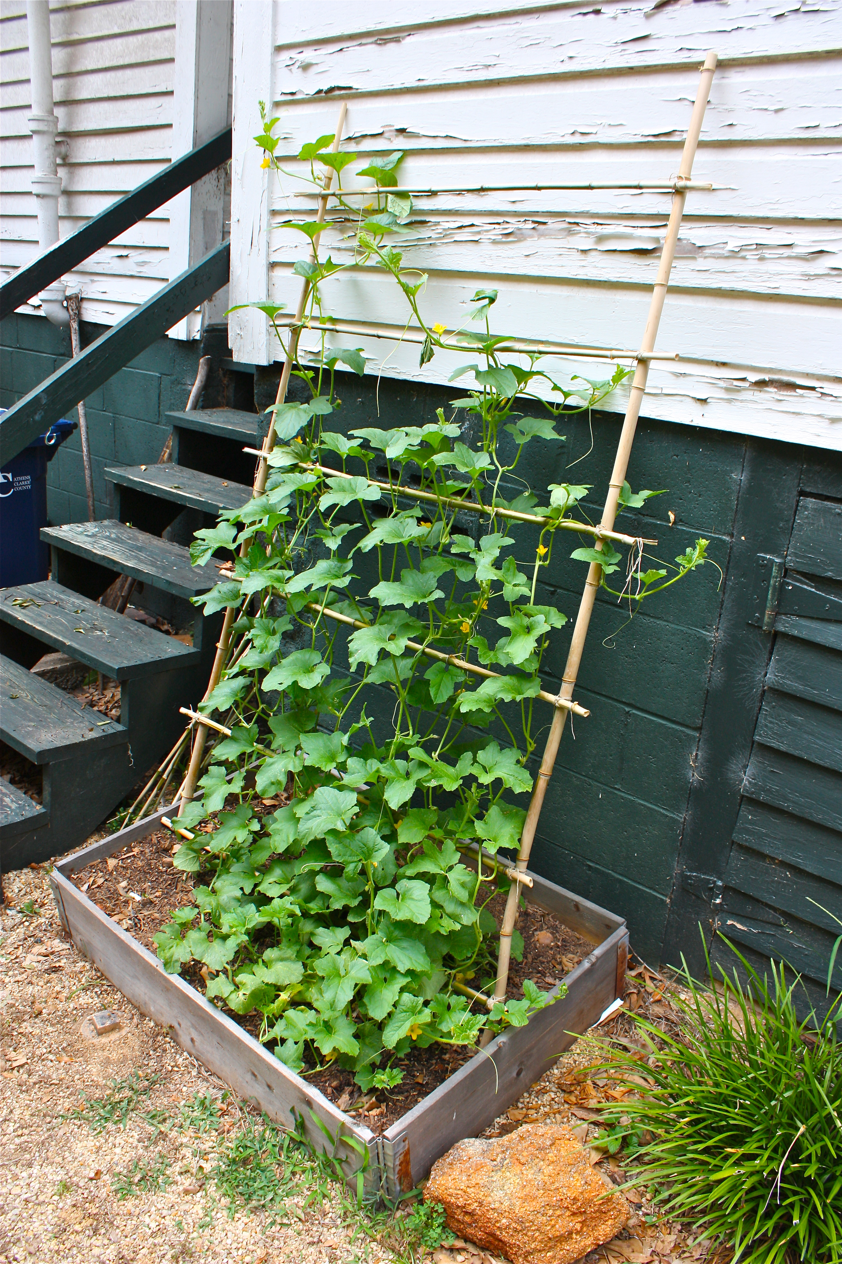 Hgtv Garden Ideas modern backyard design ideas with stone garden chair choosing great hgtv Garden Design With Honeydew Melon Vines On A Trellis Pedagogy Of The Plants With Hgtv Landscaping