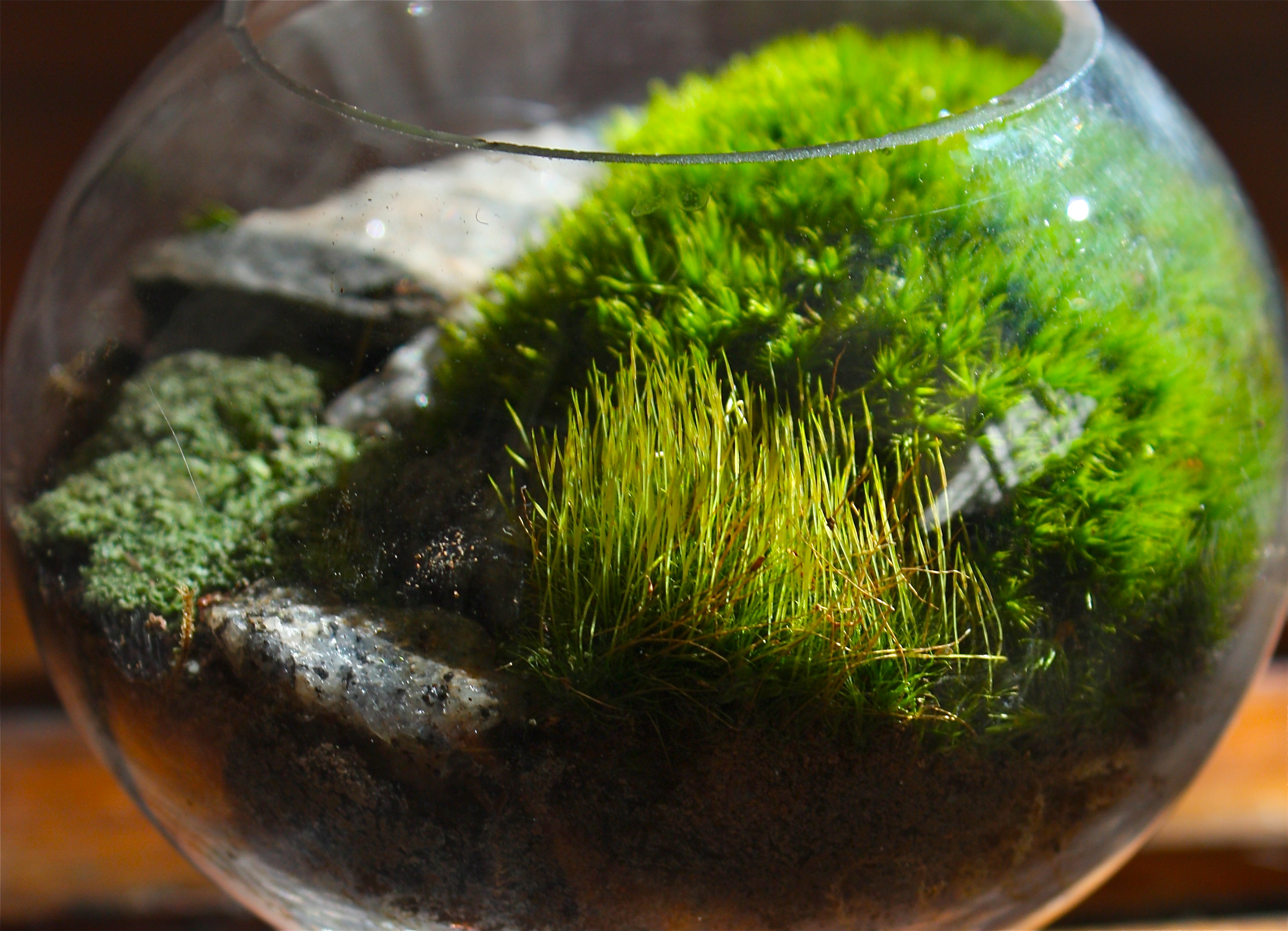 moss terrariums pedagogy of the plants. Black Bedroom Furniture Sets. Home Design Ideas