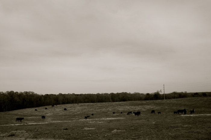 Madison County Cattle Farm