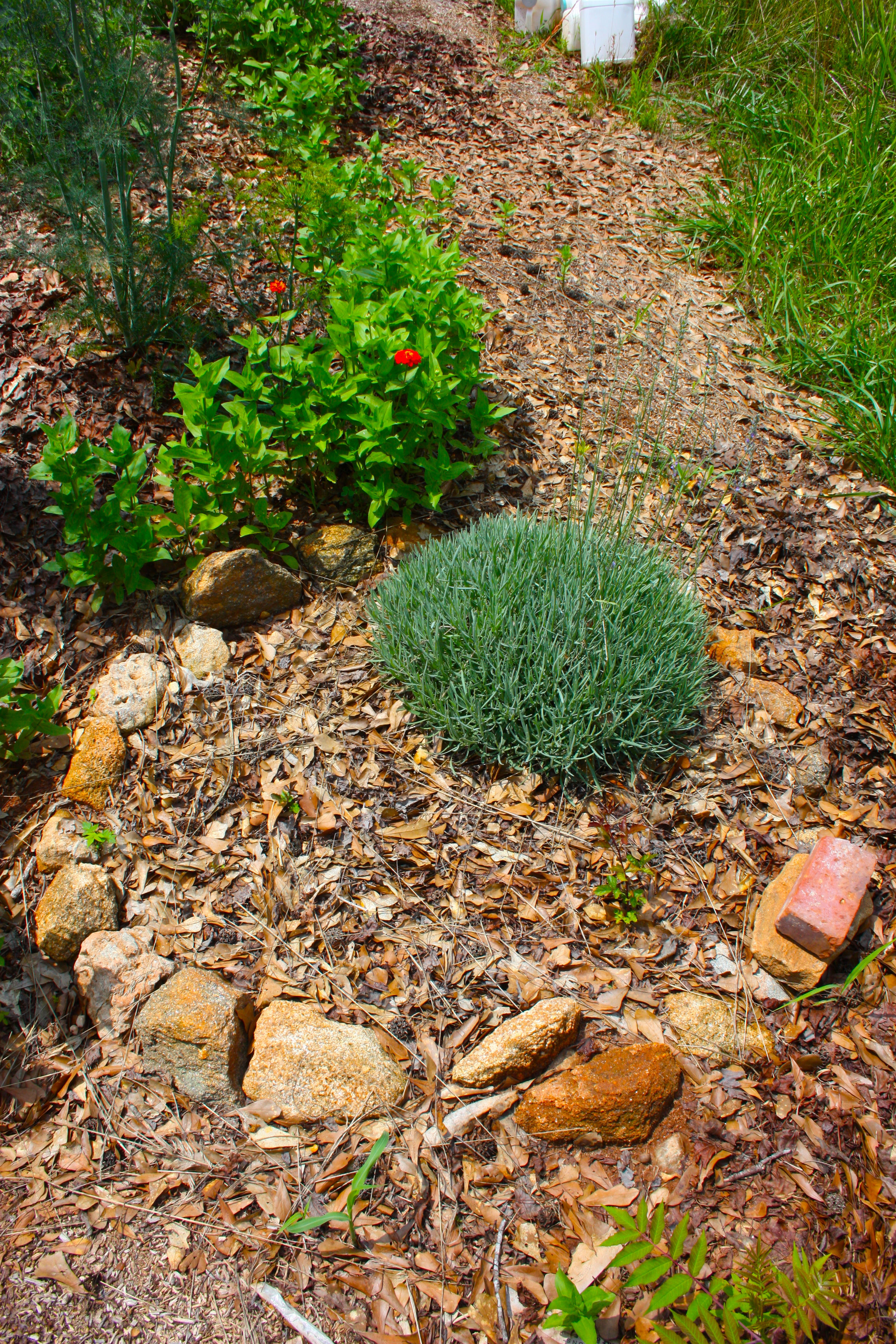 Herb Garden Path