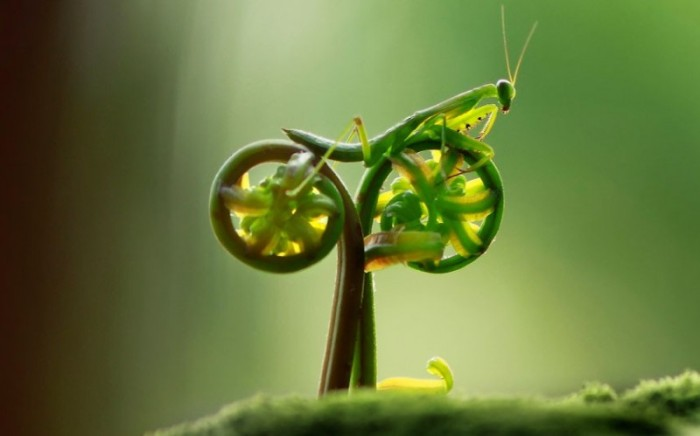 praying-mantis-bike-800x499