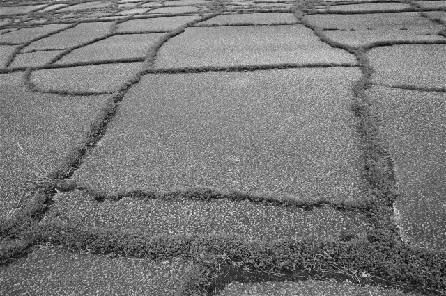 Grass Through Asphalt