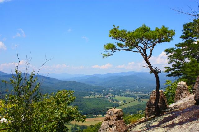 Black Rock Mountain Pine