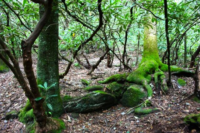 James E Edmonds Trail Moss