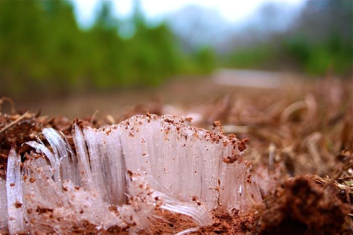 Frost Heaving in Winterville 1