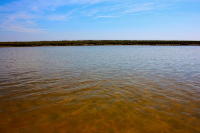 Shallow Tidal River