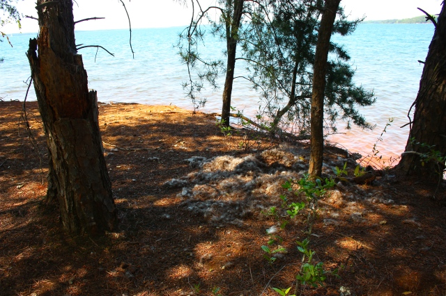 Abandoned Goose Nest, Big Island Lake Hartwell