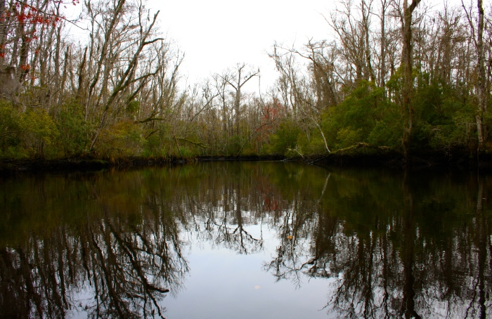North Along Lofton Creek