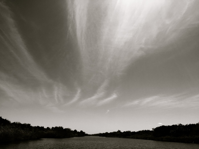 Wisps of Clouds Over Tomoka State Park