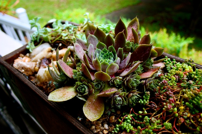 Skateboard Deck Succulent Planter