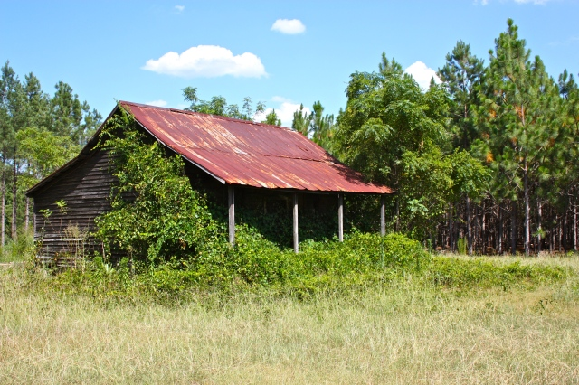Old Kudzu Home, Georgia Hwy 15